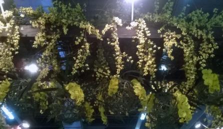 orquideas-pergola-pendentes-amarelas