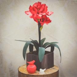 Arranjo de Amarilis: Perfeito para demonstrar admiração - Formosinha Decorações